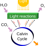 Difference Between Synthesis and Biosynthesis