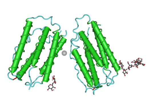 Difference Between Interferon Beta 1A and 1B