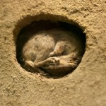 Difference Between Hibernation and Aestivation