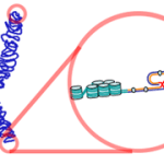 Difference Between Telomeres and Telomerase