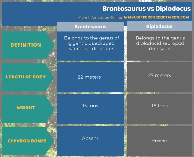 Difference Between Brontosaurus and Diplodocus in Tabular Form