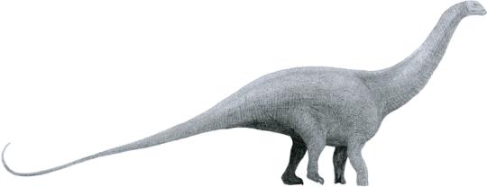 Key Difference - Brontosaurus vs Diplodocus