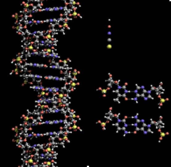 Key Difference -Deoxyribonucleic Acid vs Ribonucleic Acid
