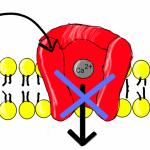 Difference Between Beta Blocker and Calcium Channel Blocker