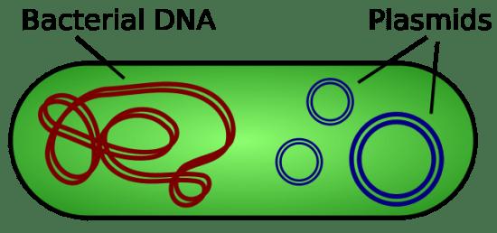 Key Difference - Plasmid DNA vs Chromosomal DNA
