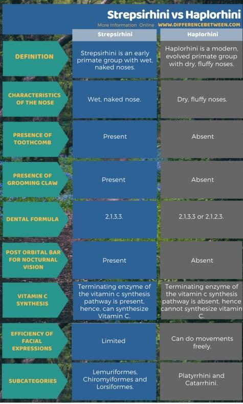 Difference Between Strepsirhini and Haplorhini in Tabular Form