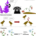 Difference Between Prezygotic and Postzygotic