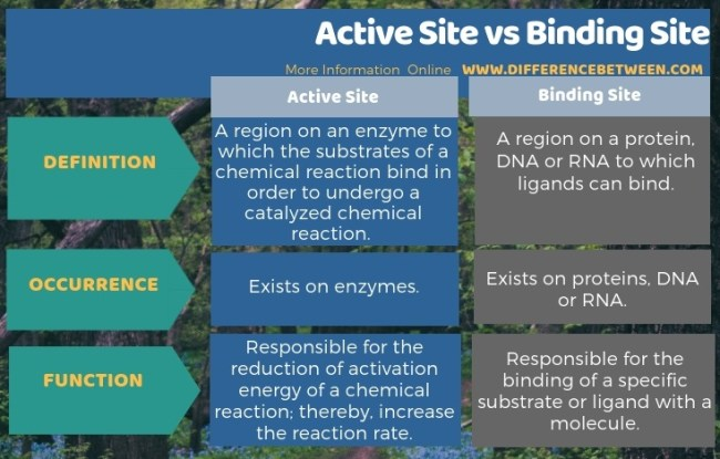Difference Between Active Site and Binding Site in Tabular Form