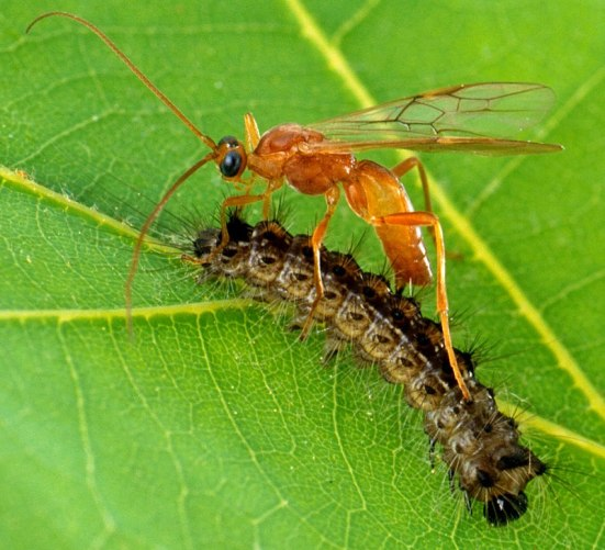 Difference Between Biological Control and Chemical Control_Fig 01
