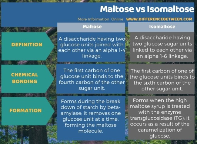 Difference Between Maltose and Isomaltose in Tabular Form