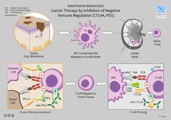 Difference Between Gene Therapy and Immunotherapy_Fig 02
