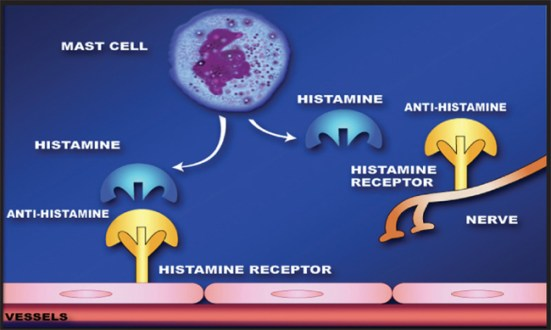 Difference Between Histamine and Antihistamine_Fig 02
