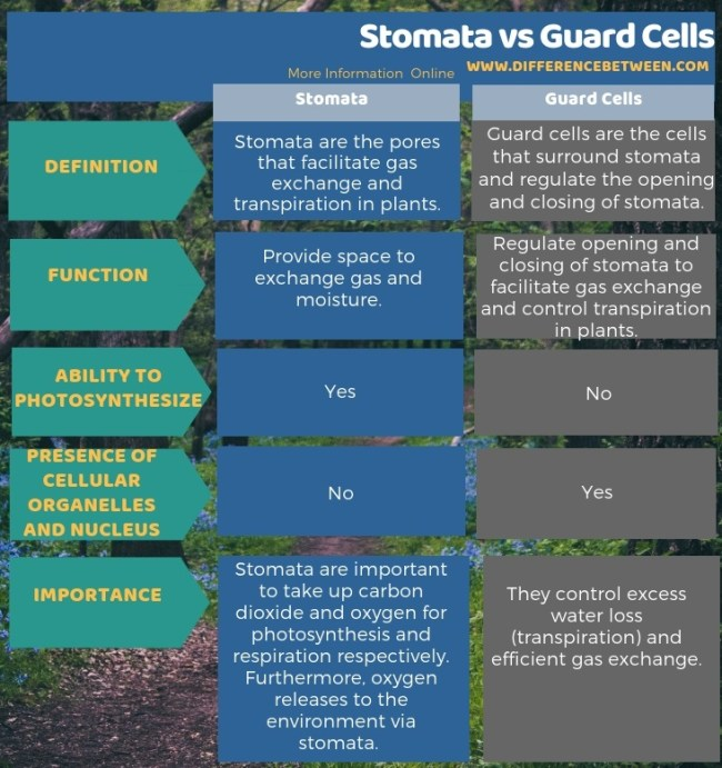 Difference Between Stomata and Guard Cells in Tabular Form