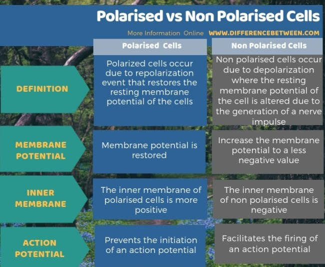 Difference Between Polarised and Non Polarised Cells in Tabular Form