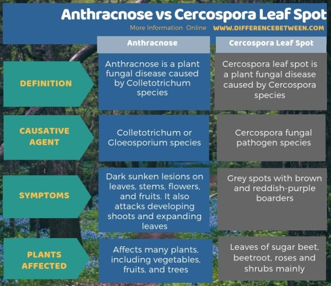 Difference Between Anthracnose and Cercospora Leaf Spot in Tabular Form