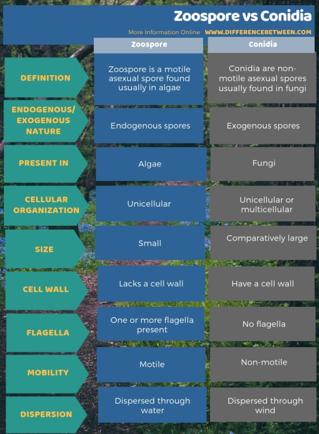 Difference Between Zoospore and Conidia in Tabular Form