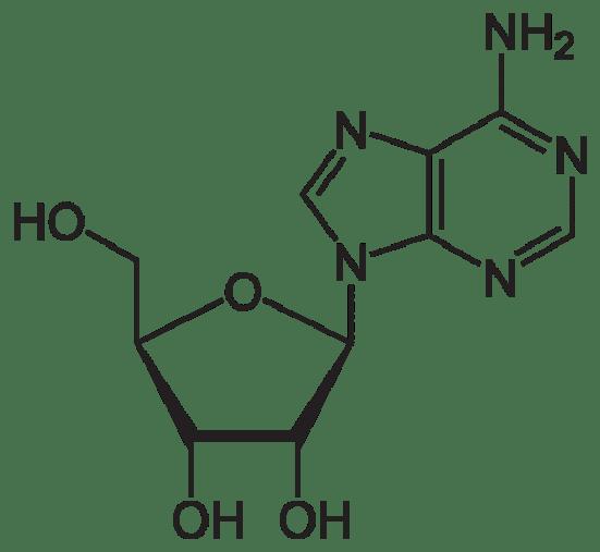 Key Difference - Adenosine vs Adenine
