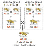 Difference Between Complementation and Recombination