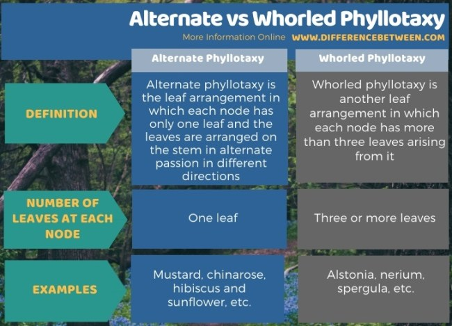 Difference Between Alternate and Whorled Phyllotaxy in Tabular Form