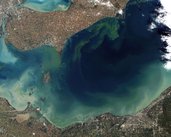 Difference Between Eutrophication and Algal Bloom