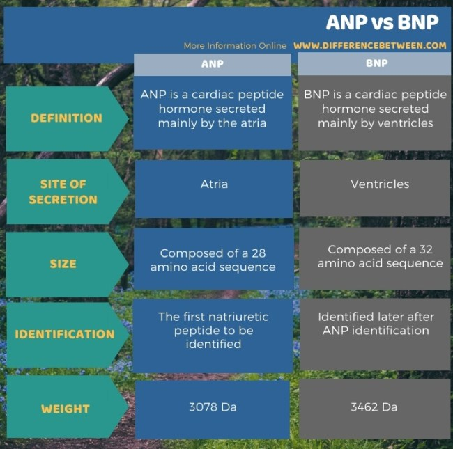 Difference Between ANP and BNP in Tabular Form