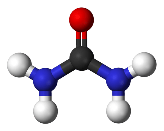 Key Difference - Blood Urea Nitrogen vs Blood Urea