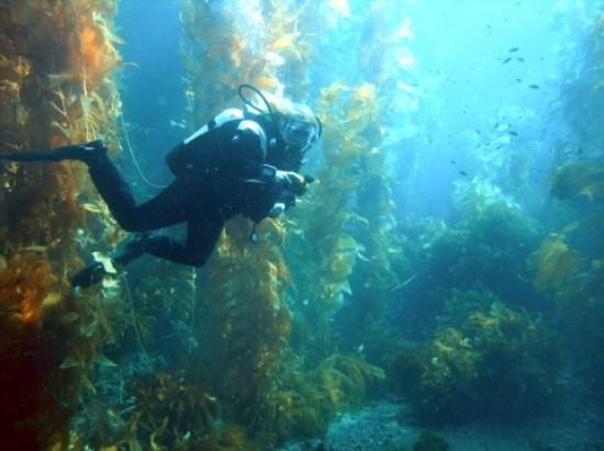 Key Difference - Terrestrial vs Aquatic Biomes