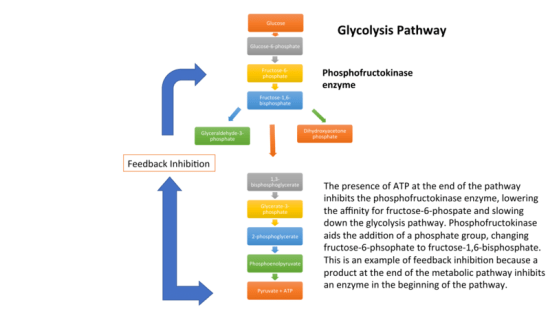 Difference Between Feedback Inhibition and Feedback Repression