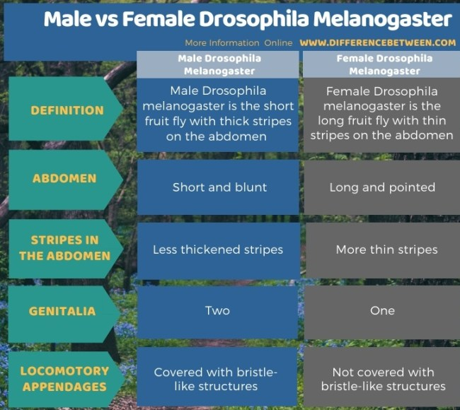 Difference Between Male and Female Drosophila Melanogaster in Tabular Form