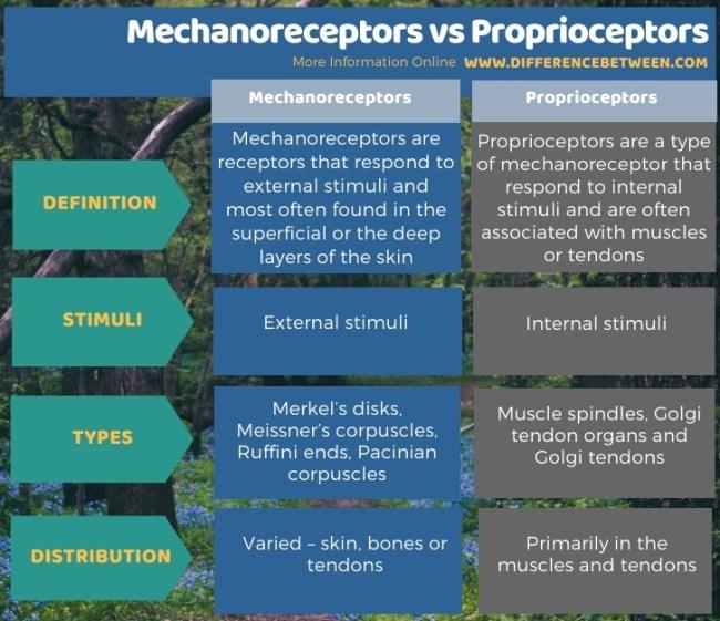 Difference Between Mechanoreceptors and Proprioceptors in Tabular Form