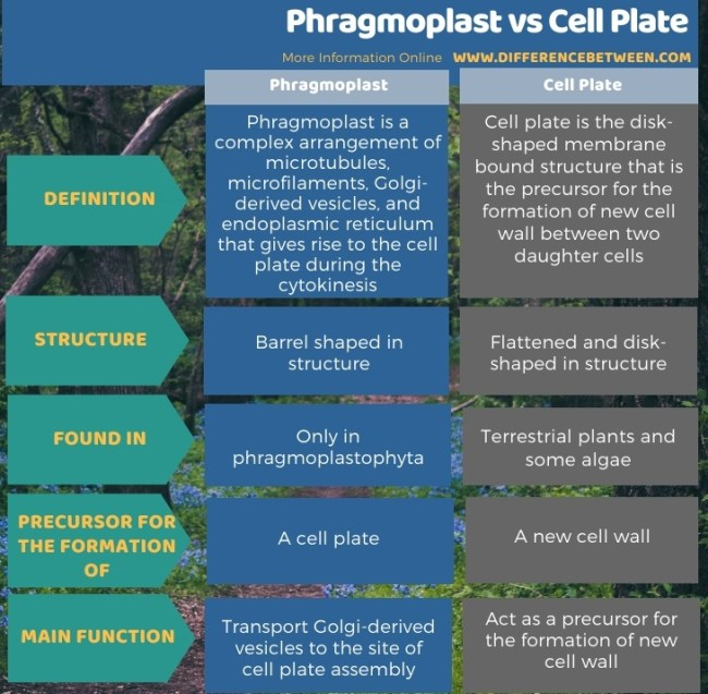 Difference Between Phragmoplast and Cell Plate in Tabular Form