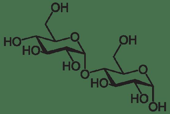 Key Difference - Trehalose vs Maltose