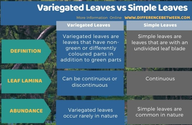 Difference Between Variegated Leaves and Simple Leaves in Tabular Form