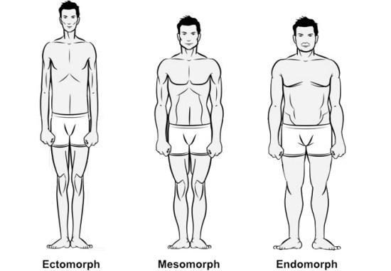 Difference Between Ectomorph Mesomorph and Endomorph