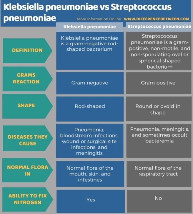 Difference Between Klebsiella pneumoniae and Streptococcus pneumoniae in Tabular Form