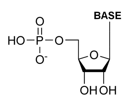 Key Difference - DNA vs RNA Nucleotide