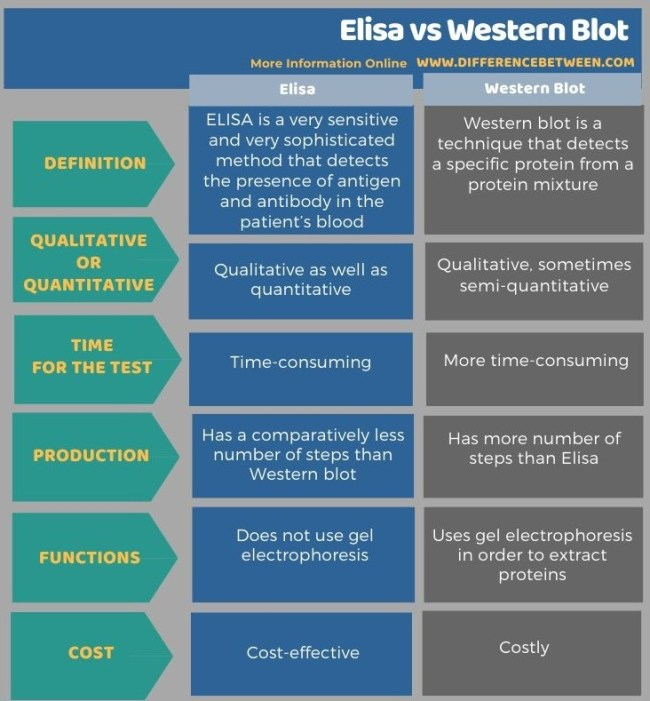 Difference Between Elisa and Western Blot - Tabular Form