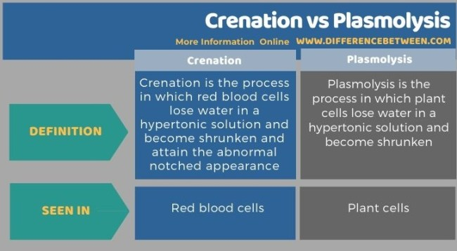 Difference Between Crenation and Plasmolysis - Tabular Form