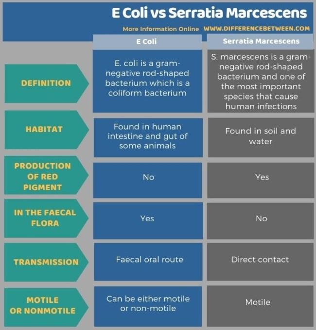 Difference Between E Coli and Serratia Marcescens in Tabular Form