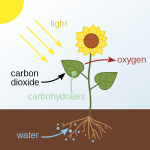 Difference Between Photochemical and Electrochemical Reaction