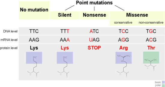 Difference Between Silent and Neutral Mutation