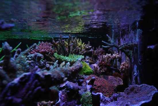 Difference Between LPS and SPS Corals