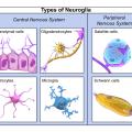 Difference Between Microglia and Macroglia