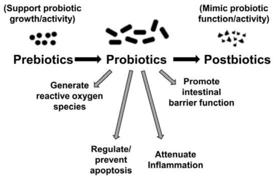 Difference Between Probiotics and Prebiotics and Synbiotics