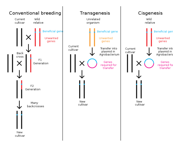 Difference Between Cisgenesis and Intragenesis