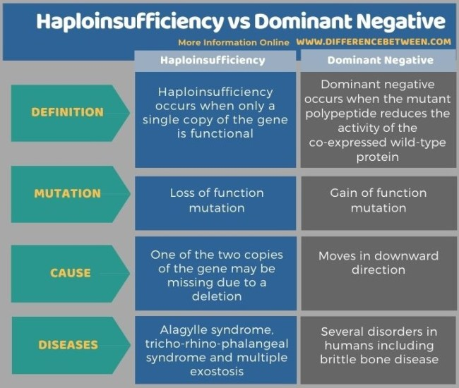 Difference Between Haploinsufficiency and Dominant Negative in Tabular Form