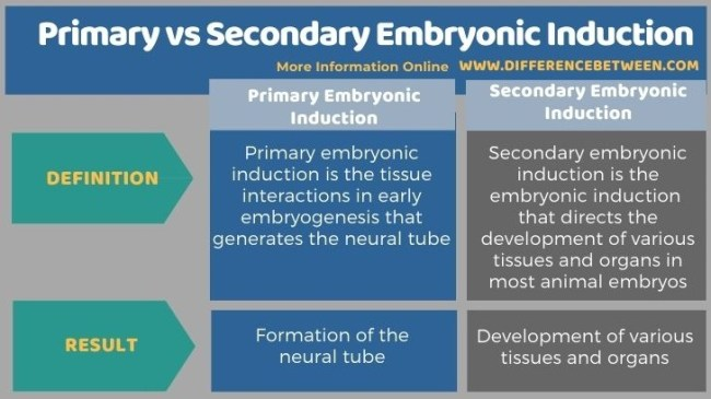 Difference Between Primary and Secondary Embryonic Induction in Tabular Form