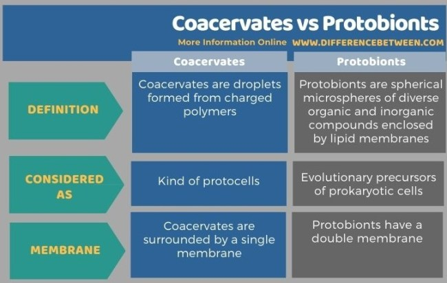 Difference Between Coacervates and Protobionts in Tabular Form