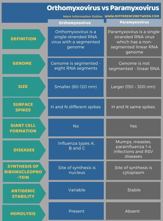 Difference Between Orthomyxovirus and Paramyxovirus in Tabular Form