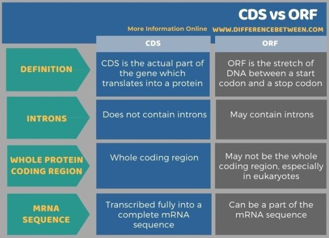 Difference Between CDS and ORF in Tabular Form